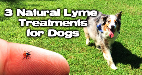 3 Natural Lyme Treatments for Dogs